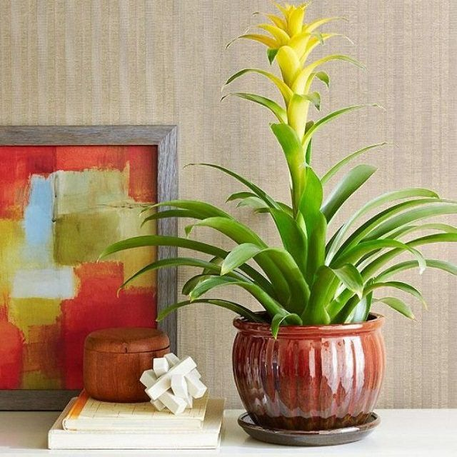 19 best low maintenance houseplants notey for Tall indoor plants low maintenance
